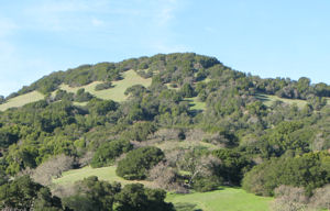 Rolling hills in Marin County